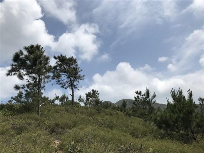 Hiking 29.4.18 Sze Shan Cheung Shan (6)