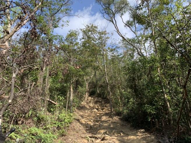 Hiking 16.2.2019 Kai Kung Shan (10)