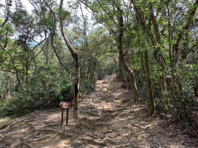 Hiking 16.2.2019 Kai Kung Shan (13)