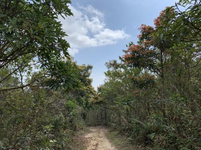 Hiking 16.2.2019 Kai Kung Shan (17)