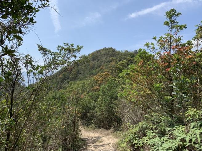 Hiking 16.2.2019 Kai Kung Shan (19)