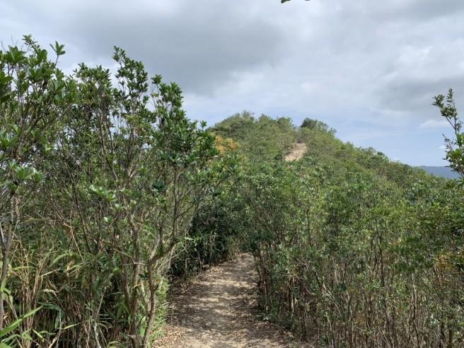 Hiking 16.2.2019 Kai Kung Shan (22)