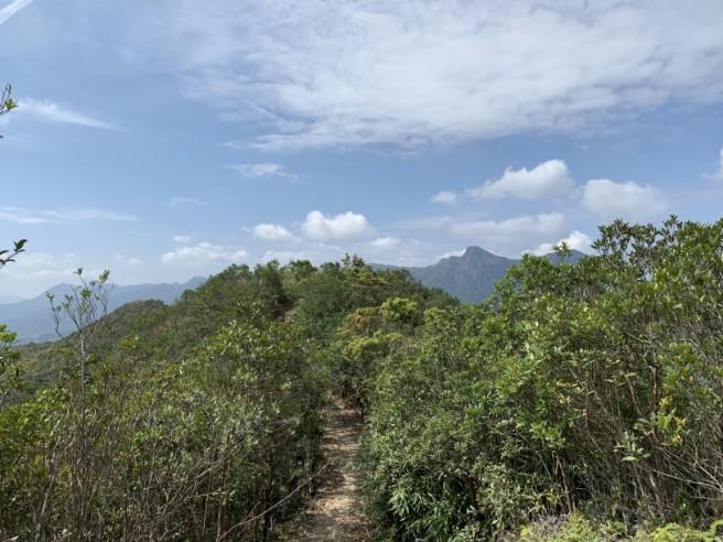 Hiking 16.2.2019 Kai Kung Shan (23)