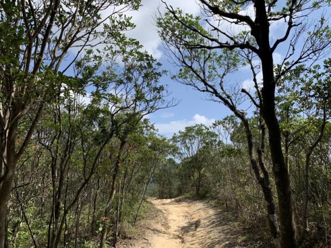 Hiking 16.2.2019 Kai Kung Shan (43)