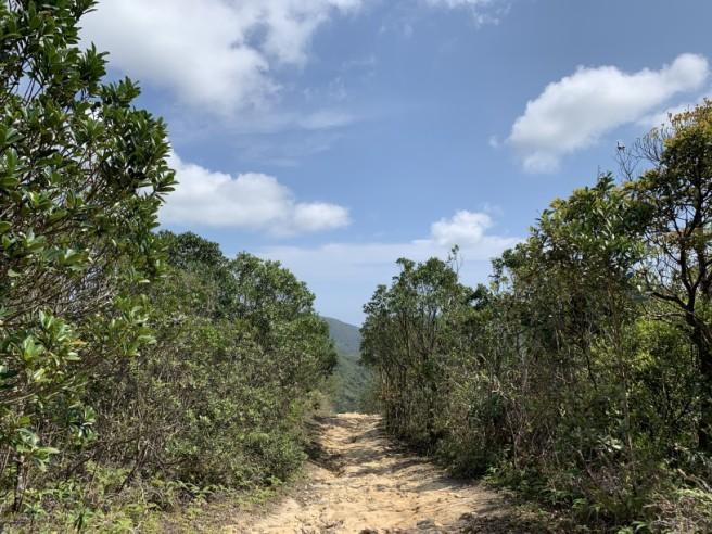 Hiking 16.2.2019 Kai Kung Shan (44)