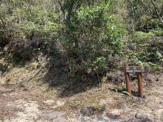 Hiking 16.2.2019 Kai Kung Shan (51)