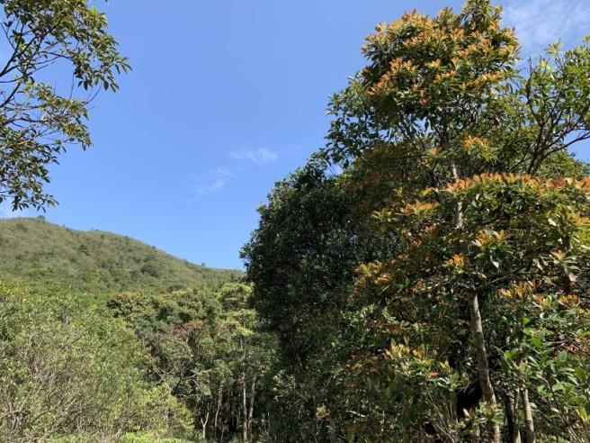 Hiking 16.2.2019 Kai Kung Shan (55)
