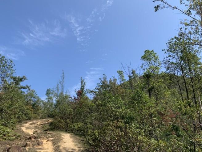Hiking 16.2.2019 Kai Kung Shan (60)