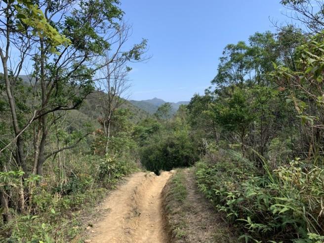 Hiking 16.2.2019 Kai Kung Shan (63)