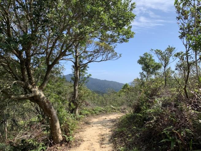 Hiking 16.2.2019 Kai Kung Shan (65)