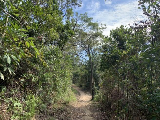 Hiking 16.2.2019 Kai Kung Shan (67)