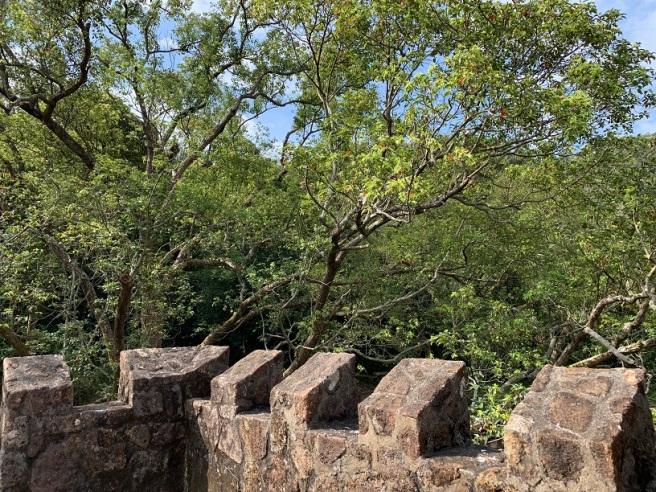 Hiking 16.2.2019 Kai Kung Shan (73)