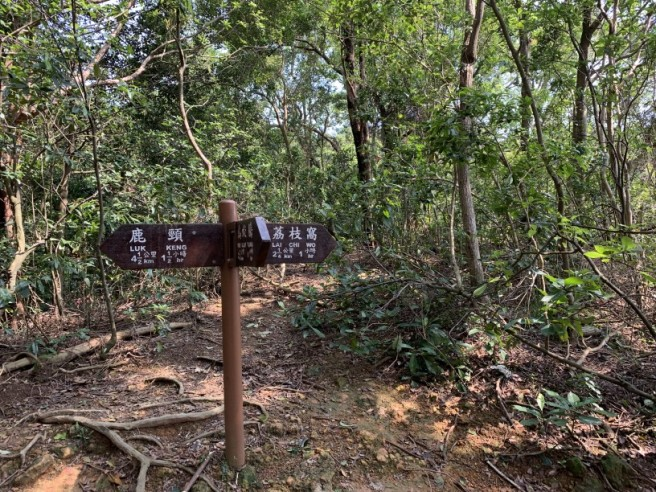 Hiking 12.3.2019 Pan Pui Teng (13)