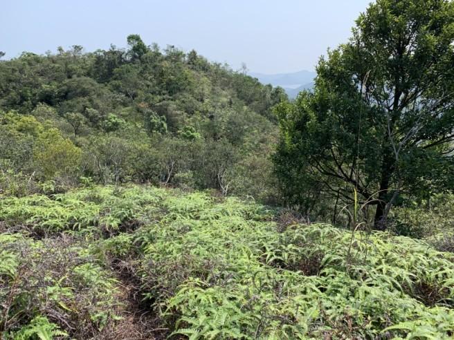 Hiking 12.3.2019 Pan Pui Teng (21)
