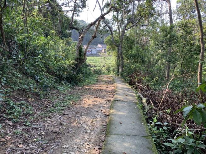 Hiking 12.3.2019 Pan Pui Teng (79)