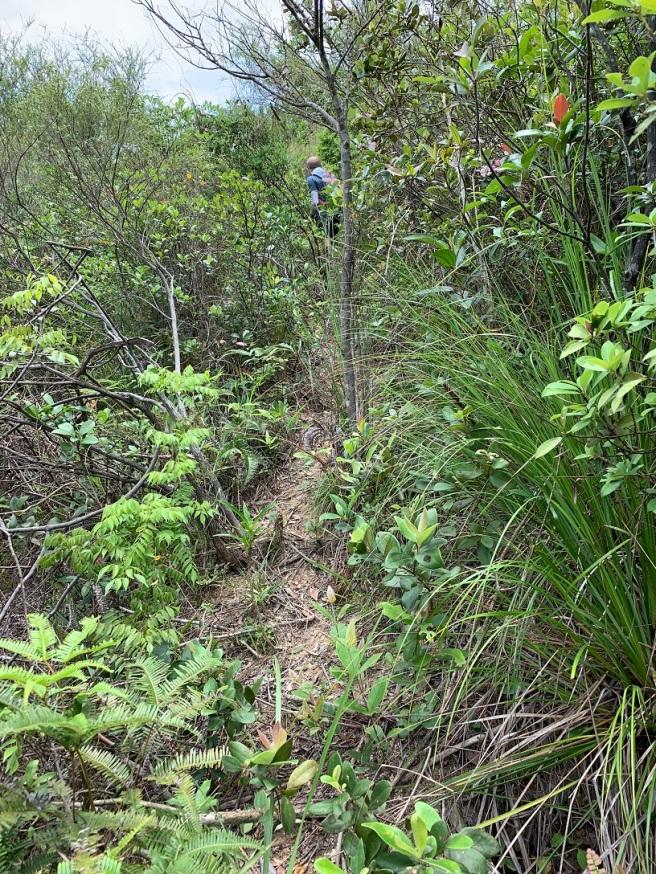 Hiking 19.5.2019 Shek Nga Tau (20)