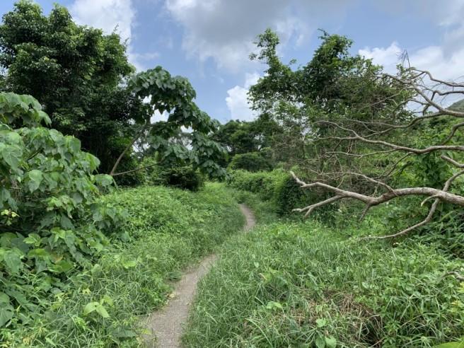 Hiking 19.5.2019 Shek Nga Tau (3)