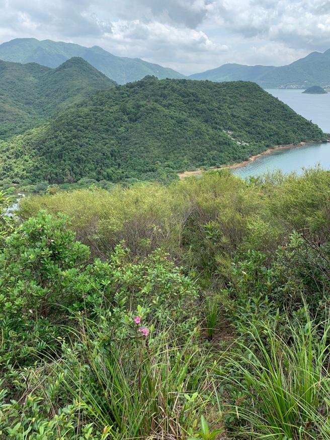Hiking 19.5.2019 Shek Nga Tau (39)