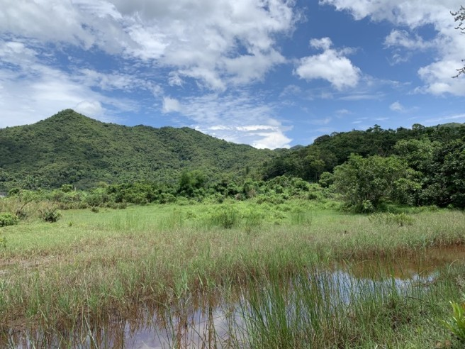 Hiking 2.6.2019 Au Pui Leng (22)