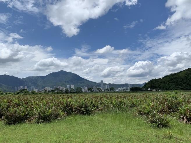 Hiking 2.6.2019 Au Pui Leng (26)