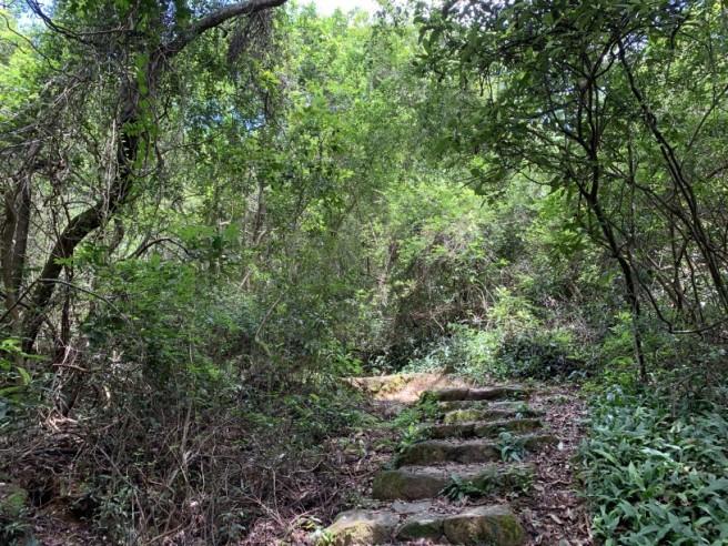 Hiking 2.6.2019 Au Pui Leng (29)