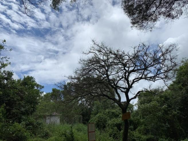 Hiking 2.6.2019 Au Pui Leng (3)