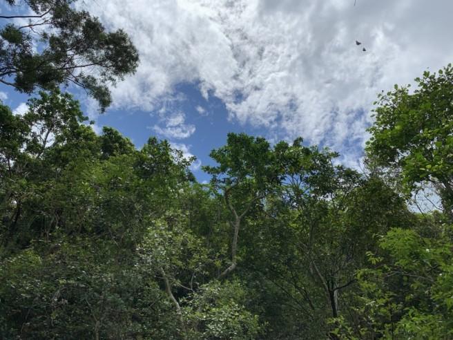 Hiking 2.6.2019 Au Pui Leng (4)