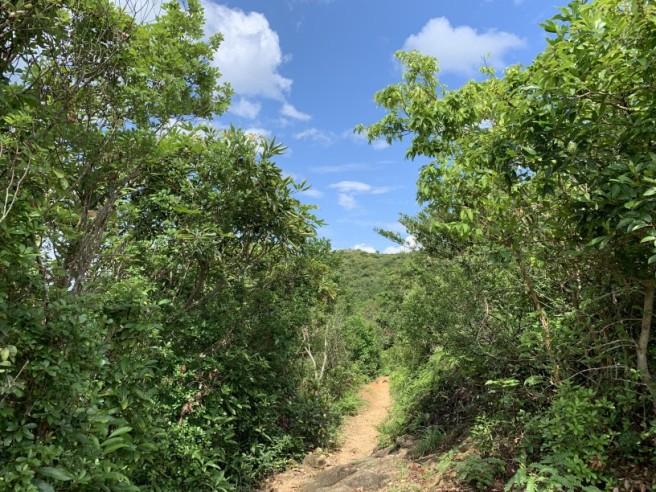 Hiking 2.6.2019 Au Pui Leng (46)
