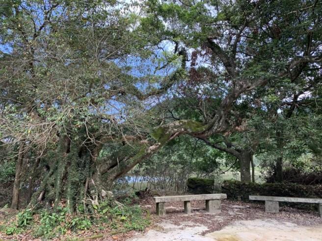 Hiking 2.6.2019 Au Pui Leng (58)